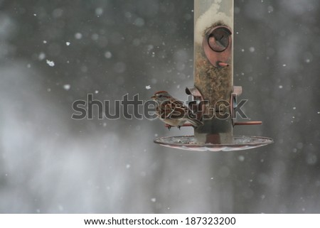Bird feeding in snow - stock photo