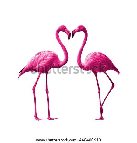 Bird flamingo walking on a white background , flamingo isolated on white background ,Beautiful bird flamingo , flamingo in lovely moment - stock photo