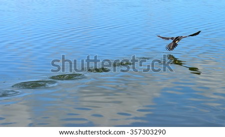 Bird flapping its wing to take-off from water surface - stock photo