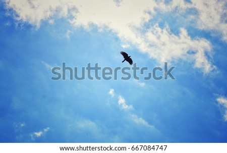 Bird Flying High In The Cloudy Blue Sky