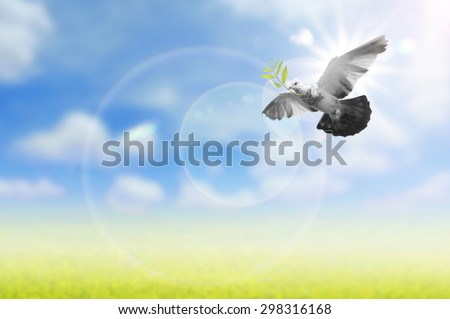 Bird flying  in the air , all concept , peace and spirituality - stock photo
