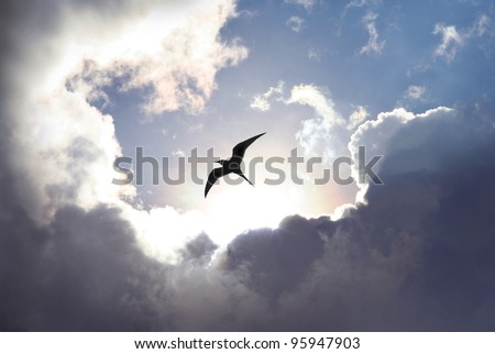 Bird flying in the sky with a dramatic cloud formation in the background. Light shining trough which gives a symbolic value of life and hope. - stock photo