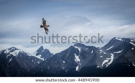 Bird flying over snow mountains