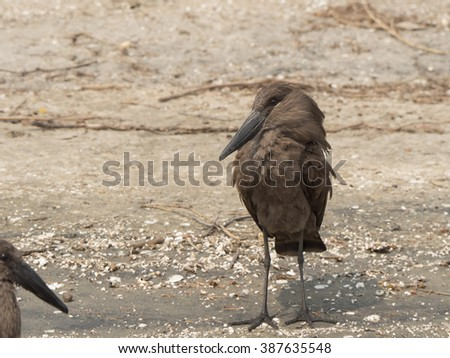 Bird hammer  - stock photo