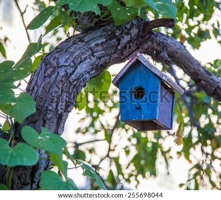 Bird house hanging in tree - stock photo