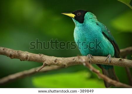 Bird in backyard - stock photo