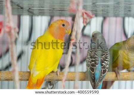 bird in cage - stock photo