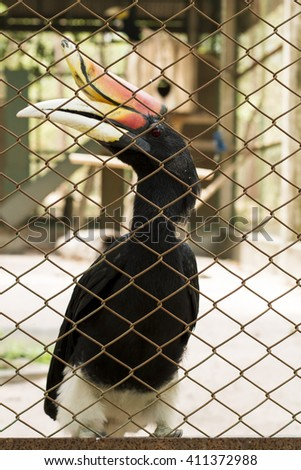 Bird in the cage,Rhinoceros hornbill (Buceros rhinoceros),The concept of freedom depletion Helpless and imprisoned However, the bird is caught and imprisoned in a cage - stock photo