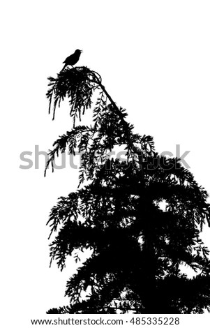Bird in tree isolated