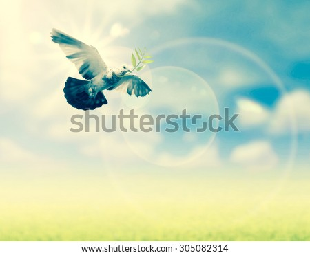 Bird into the air , all concept , peace and spirituality - stock photo