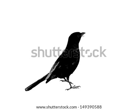 Bird isolated on white background