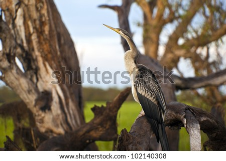 Bird life in Kakadu National Park, Australia - stock photo