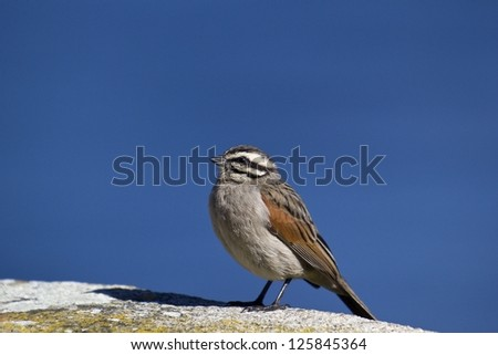 Bird looking up into blue sky - stock photo