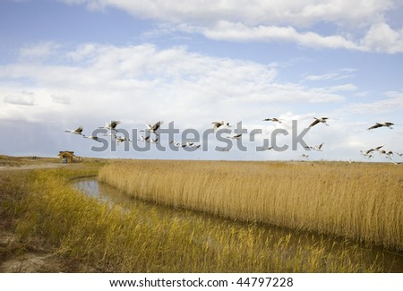 bird migrating - stock photo