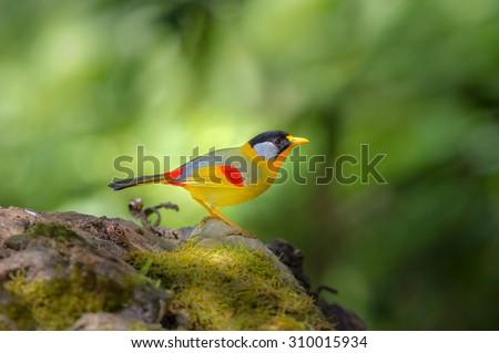 Bird Name silver-eared mesia (Leiothrix argentauris) - stock photo