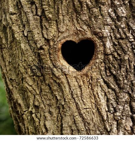 Bird nest in hollow tree trunk - stock photo