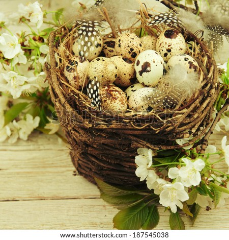 Bird nest on tree branch with eggs inside.  - stock photo