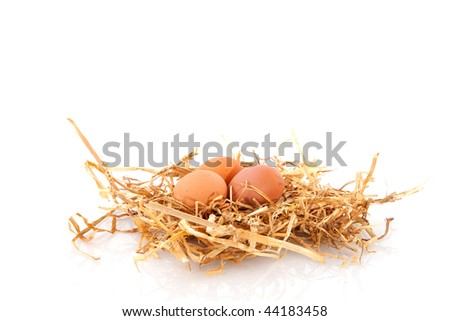 bird nest with eggs in spring isolated over white