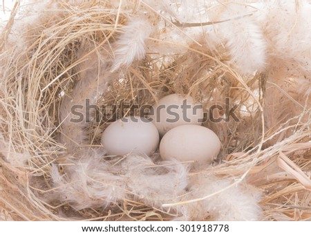 Bird nest with eggs on white background. Vintage and bright picture. select focus.  - stock photo