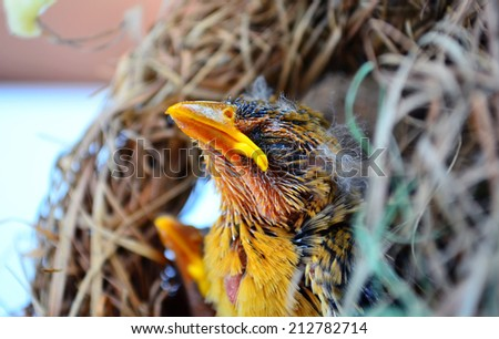 Bird nest with young birds - stock photo