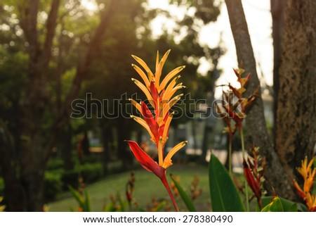 Bird of paradise flower and gardan background with sunlight - stock photo