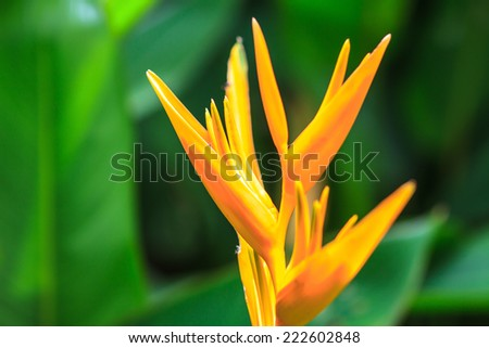 Bird of Paradise flower, flower from tropical forest - stock photo
