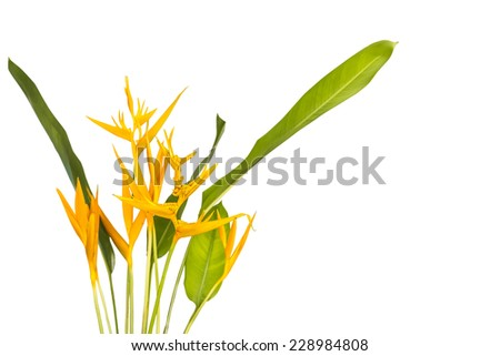 Bird of Paradise Flowers Isolated on a White Background(This image contain clipping path.) - stock photo
