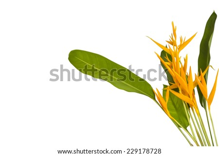 Bird of Paradise Flowers Isolated on a White Background(This image contain clipping path.)