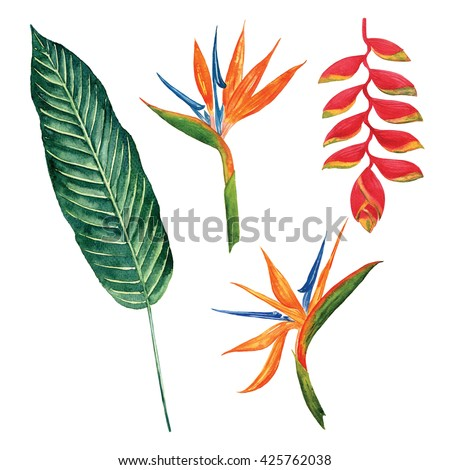 Bird of paradise with leaf tropical jungle watercolor object isolated on white background - stock photo