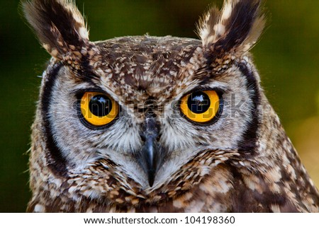 Bird of prey - stock photo