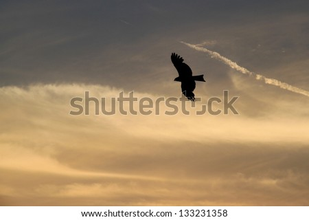 Bird of prey silhouette against a cloudy background