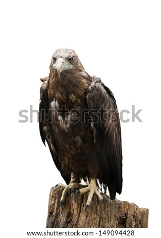 Bird of prey sitting on a tree stump isolated on white