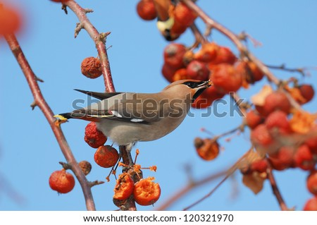 Bird on a branch in an apple orchard