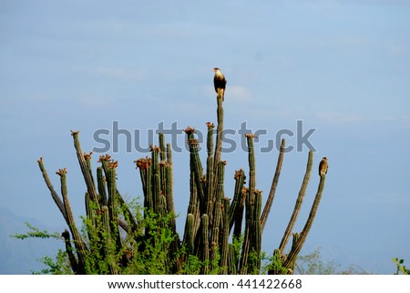 Bird on a cactus in the Tatacoa Desert, Colombia