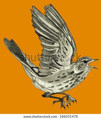bird on a orange background - stock photo