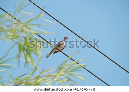 bird on a sky background - stock photo
