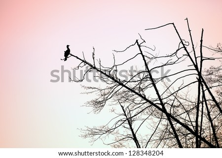 bird on a tree - stock photo