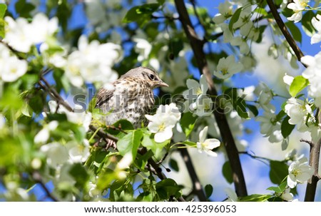 Bird on a white spring blooming branch.