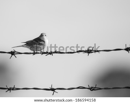 Bird On A Wire - stock photo