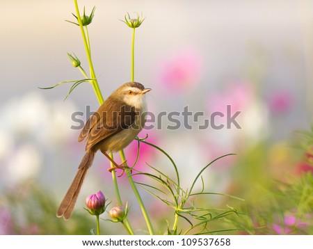 Bird on flower in the garden - stock photo