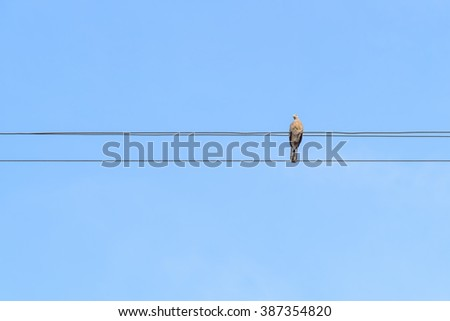 bird on line of wires over blue sky  - stock photo