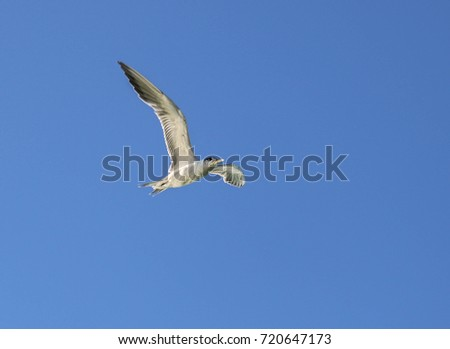 Bird on the blue sky