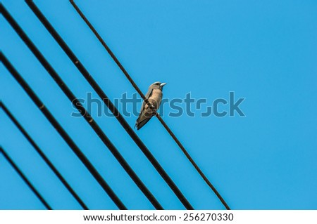 Bird on the cable wire.  - stock photo