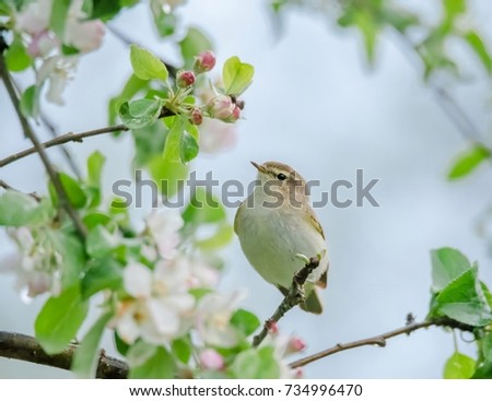 bird on the tree