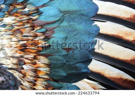 bird or chicken feather background - stock photo