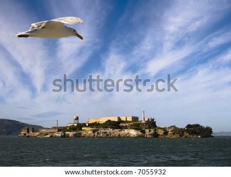 Bird over Alcatraz - stock photo
