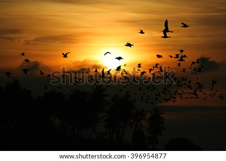 Bird over sea on Morning time