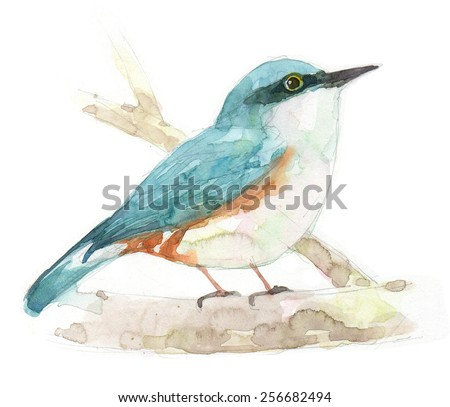 bird   painting watercolor . draw illustrations - stock photo