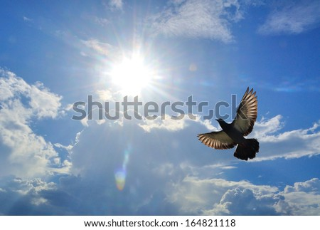 Bird ( Pigeon ) Flying above clouds on a fresh summers day - stock photo
