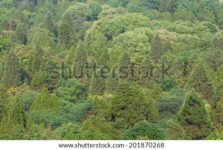 bird's-eye view of green forest - stock photo